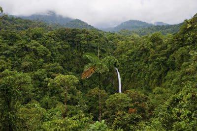 Regenwald - La Fortuna Wasserfall - Costa Rica