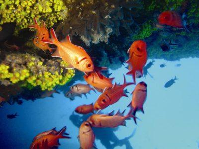 Kapverden Aktivurlaub -Kapverden Segelreise -Unterwasserwelt - Kap Verde - Afrika Urlaub