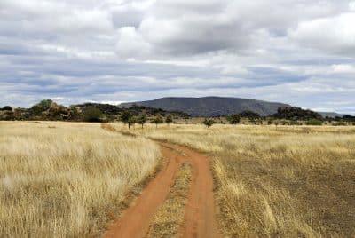 Weg - Savanne - Tansania - Reisen