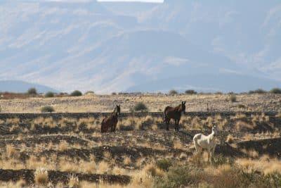 Selbstfahrerreise Namibia - Wildpferde - Fish River Canyon - Namibia