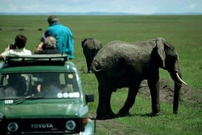Suedafrika Individualreise -Pirschfahrt - Kariega Game Reserve - Suedafrika