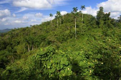 Tropischer Wald - Sierra Maestra - Kuba