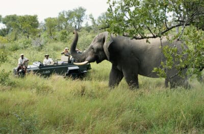 Pirschfahrt - Serengeti - Tansania