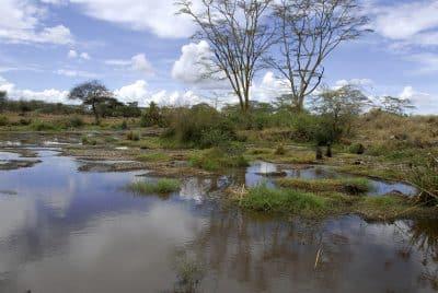 Wasser und Landschaft - Serengeti Nationalpark - Tansania