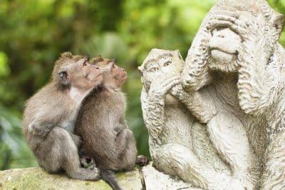 Monkey Forest - Bali - Indonesien
