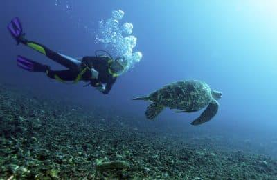 Tauchen mit Schildkroete - Lombok - Indonesien